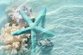 Seashell And Starfish On The Summer Beach In Sea Water. Summer Background. poster