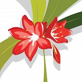 picture of belladonna  - Flower red Lily with leaves - JPG