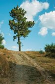 Big Tree At The End Of Dirt Road Passing Through Hilly Terrain, In A Sunny Day At The Highlands Of S poster