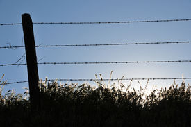 stock photo of wooden fence  - Backlit vegetation along a barbed wire fence line - JPG