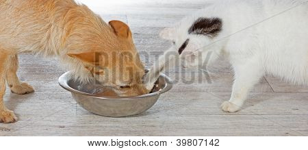 Cat Helping Himself From The Dog Bowl