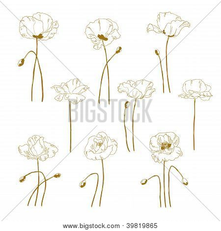 Set Of One-colored Outlined Poppy