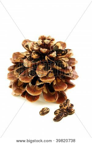 Seeds And Disclosed Pinecone.
