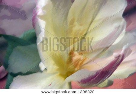 Flying Tulips