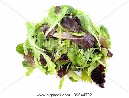 Mesclun Salad