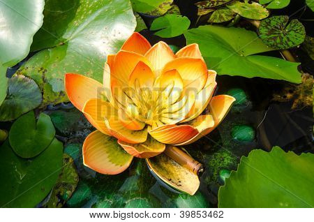 Dirty Lotus