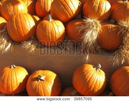 a dramatic view of pumpkins in sunlight in afternoon