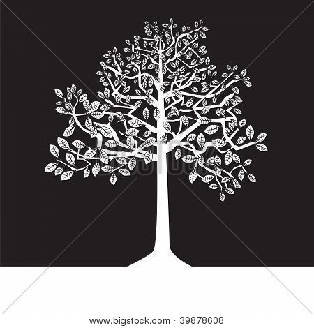 black and white tree - summer