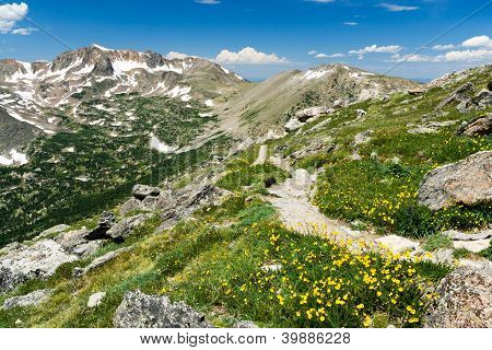 Mountain Hiking Trail Through Wildflowers