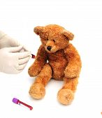 image of phlebotomy  - shot of a bear having a blood test - JPG