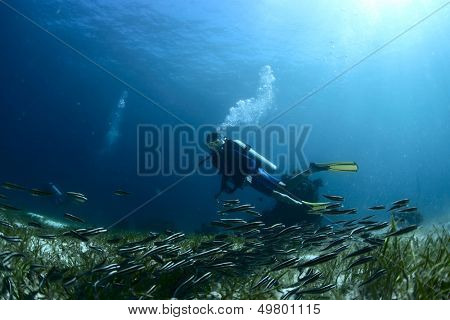Scuba diver watching school of tiny fish over bottom of a sea