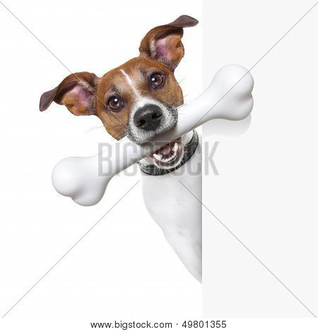 Dog With Big Bone