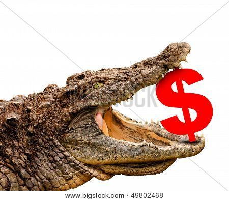 Dollar Symbol Eaten By Crocodile For Sale, Crash Or Discount.