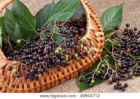 elderberry in basket on jute background