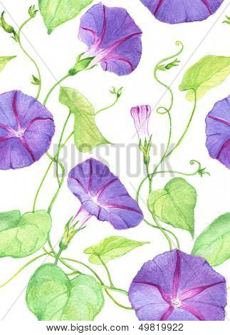 Watercolor seamless convolvulus flowers pattern