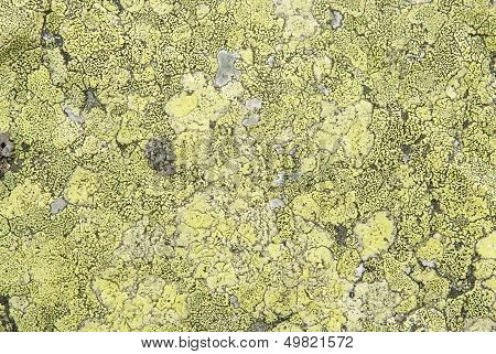 Close Up Natural Stone Background