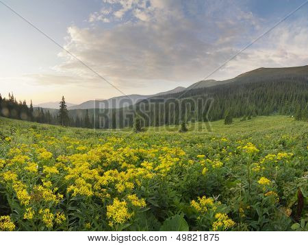 beautiful mountain scenery in the Carpathian mountains
