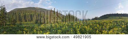 Mountain Scenery In Carpathians