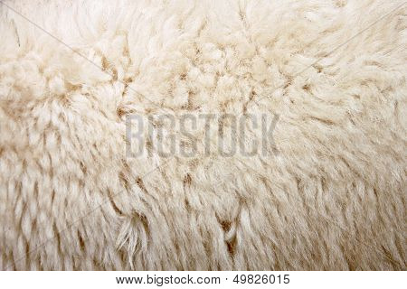 The picture Wool Of Sheep.