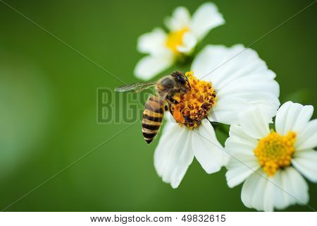 Flower Blossom And Bee .