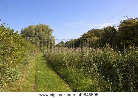 Summer Canal Towpath