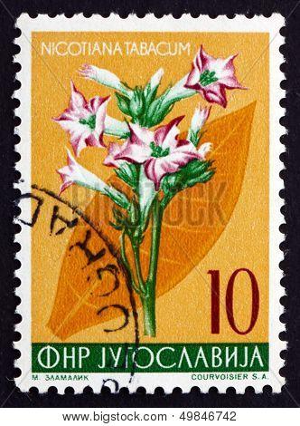 Postage Stamp Yugoslavia 1955 Tobacco, Perennial Herbaceous Plan