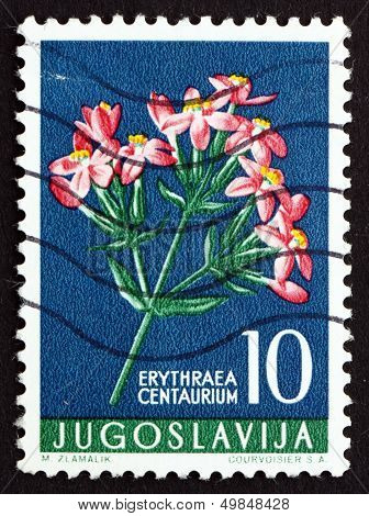Postage Stamp Yugoslavia 1956 European Centaury, Medical Herb