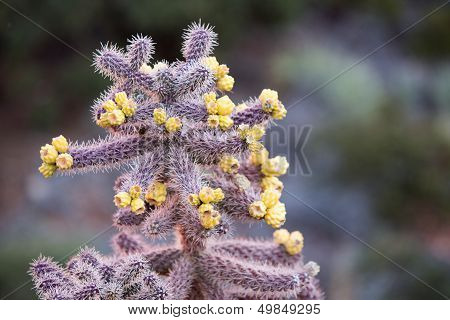 Young Cactus