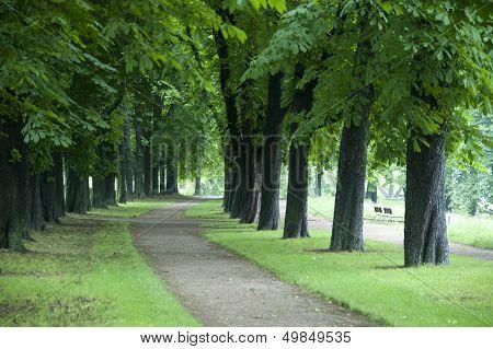 In Between.chestnut Trees