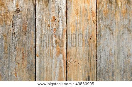Wood Texture
