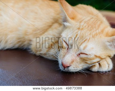 Brown Cat Sleeping On The Outdoor Sofa Bed