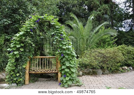 Bench Entwined Plant