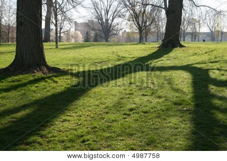 Morning Tree Shadows