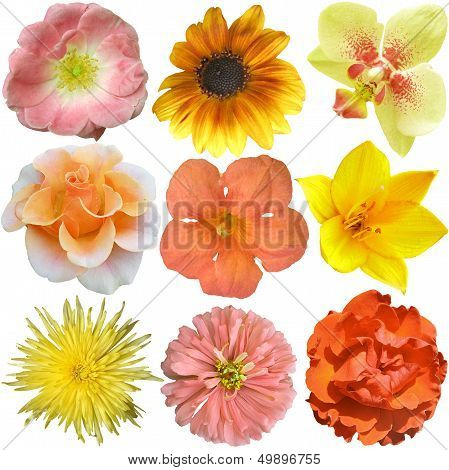 Collection Of Yellow - Orange  Flowers Isolated On White