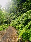 Постер, плакат: Los Tilos Forest La Palma