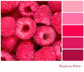 A background of fresh raspberries in a colour palette with complimentary colour swatches