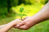 stock photo of ecology  - Father - JPG