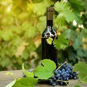 Постер, плакат: Вино концепции Еда и напитки фон с красное вино свежие кисть винограда и бутылка вина над na