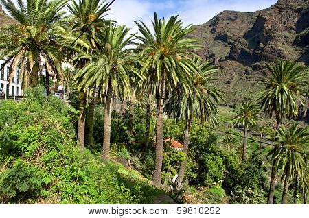 Unique Nature on Gomera