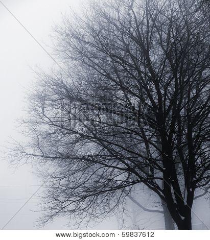 Leafless Tree In Fog