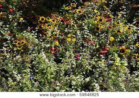 Beautiful bush of flowers in Paris