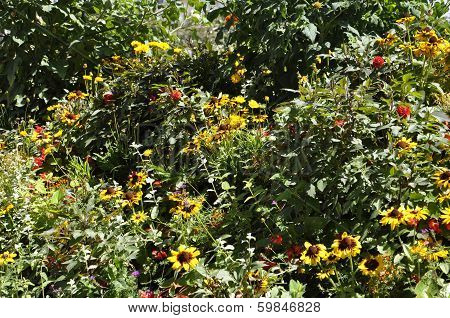 Bush of Flowers in a sunny day