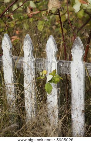 Old Dilapidated White Picket Fence