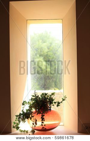 Vase Of Foliage In A Shaft Of Sunlight