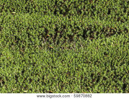 Blanket of moss