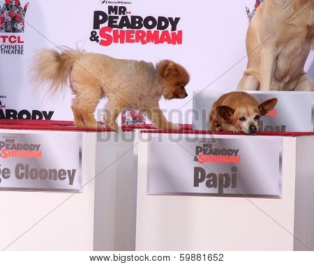 LOS ANGELES - FEB 14:  George Clooney the dog, Papi at the Mr. Peabody honored with Pawprints in Cement at TCL Chinese Theater on February 14, 2014 in Los Angeles, CA