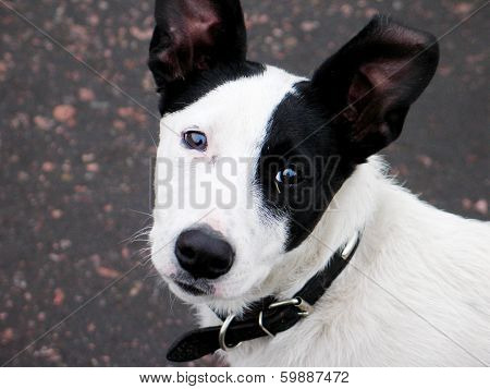 White With Black Spots Dog