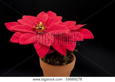 Red Christmas flower