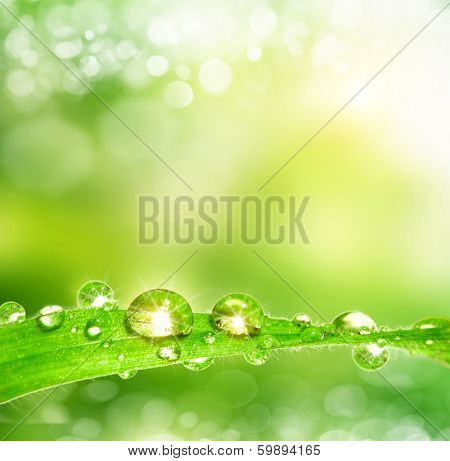 spring background. Leaves with dew drops