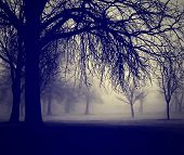 stock photo of eerie  - a very foggy day in the park done with a retro vintage instagram filter - JPG
